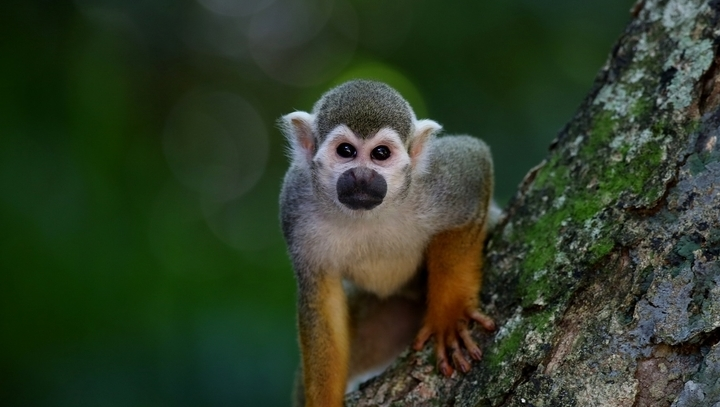 Monkey Animal Trivia