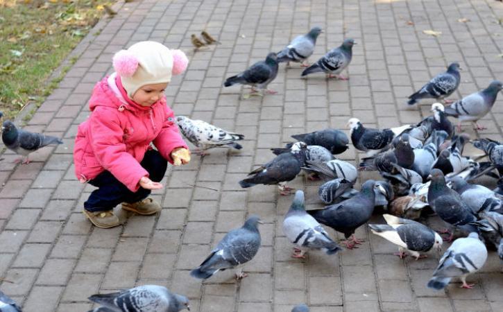 Little girl feeding pigeons